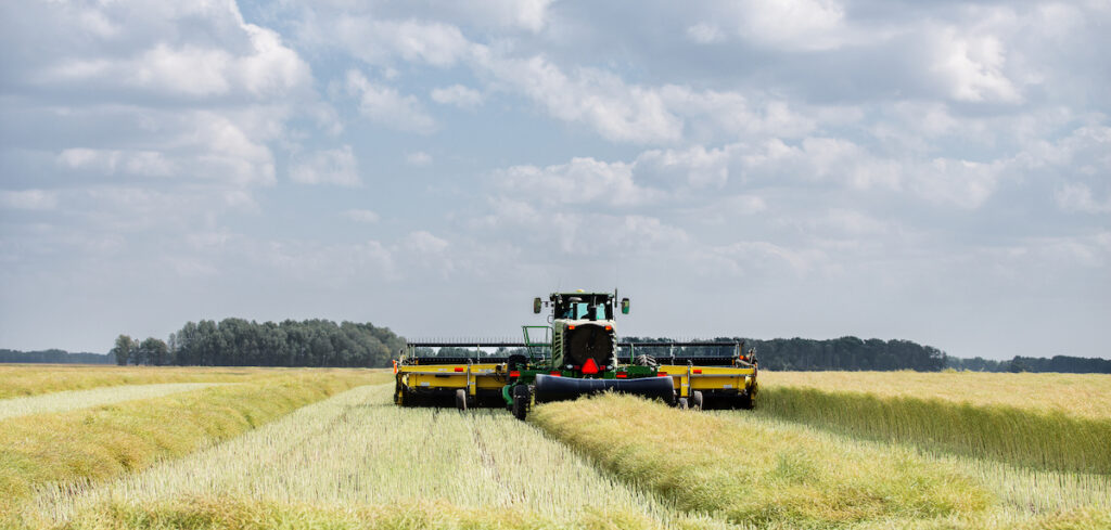 Swathing a field of canola seed for expeller-pressed oil processing